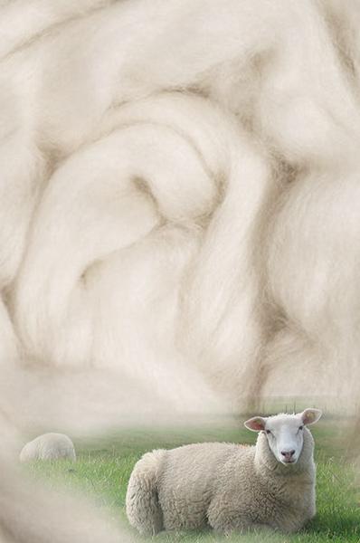 wool combing series